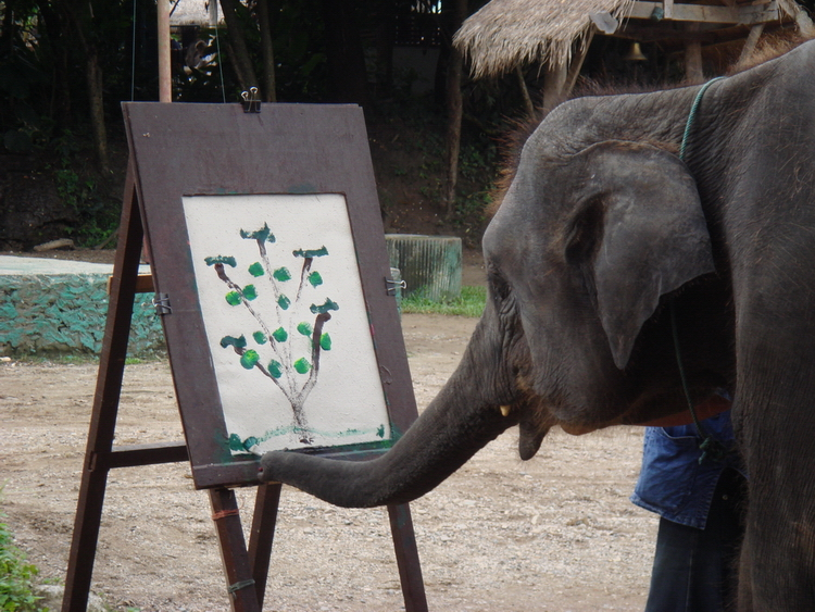 Mae Sa Elephant Camp